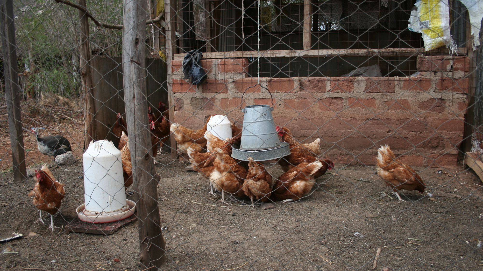 Chicken Farm at one of our partners