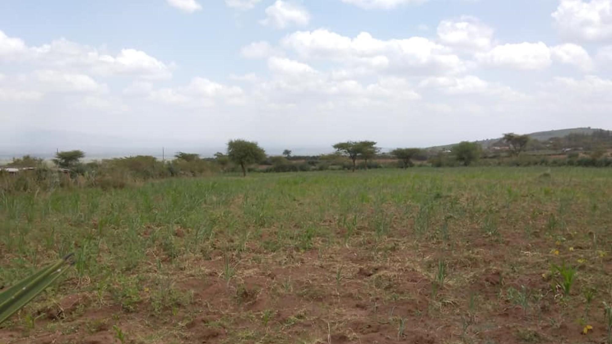 Current farmers field in Lomolo A